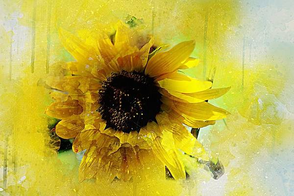 Painting - Sunflower Burst In Abstract by Shabby Chic and Vintage Art