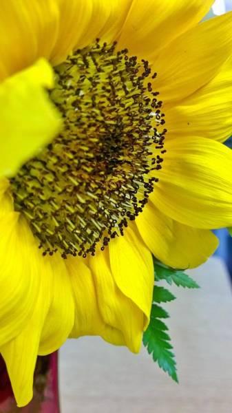 Wall Art - Photograph - Sunflower Center  by Gayle Miller