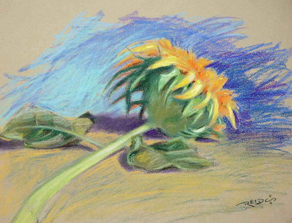 Painting - Sunflower by Christopher Reid