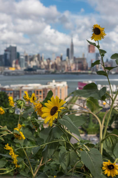 Photograph - Sunflower City View Nyc by Terry DeLuco