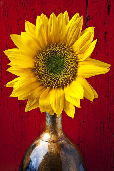 Photograph - Sunflower Close Up by Garry Gay