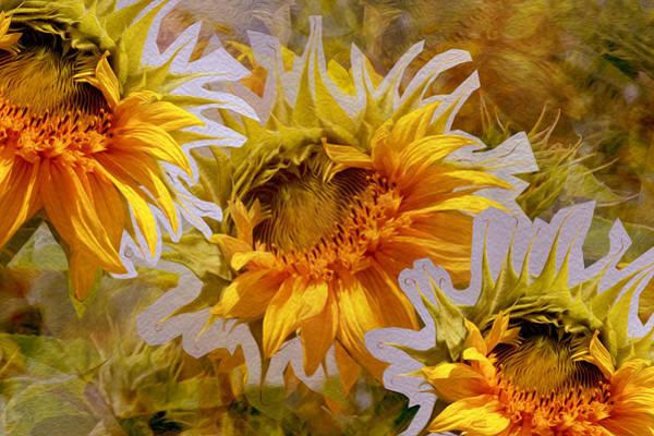 Sunflower Delight Art Print