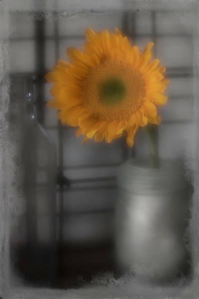 Photograph - Sunflower Dream Selective Color by Teresa Wilson