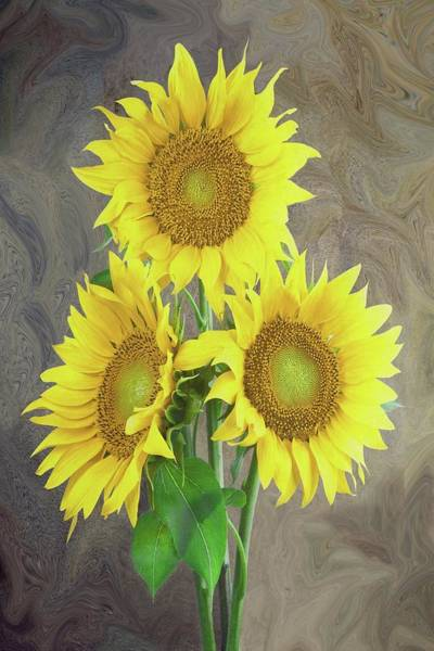 Painting - Sunflower Dreaming by David Dehner