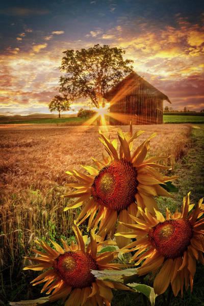 Photograph - Sunflower Evening by Debra and Dave Vanderlaan