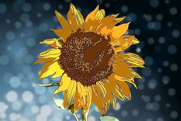Photograph - Sunflower Fantasy by Alison Frank