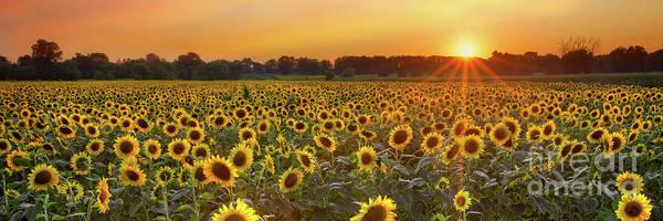 Sunflower Seeds Photograph - Sunflower Field by Todd Bielby