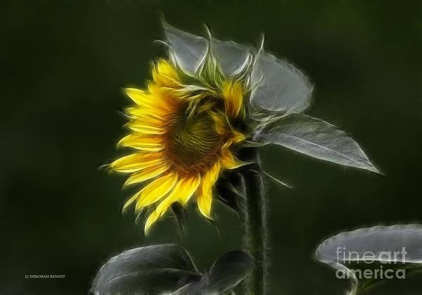Photograph - Sunflower Fractalius Beauty by Deborah Benoit