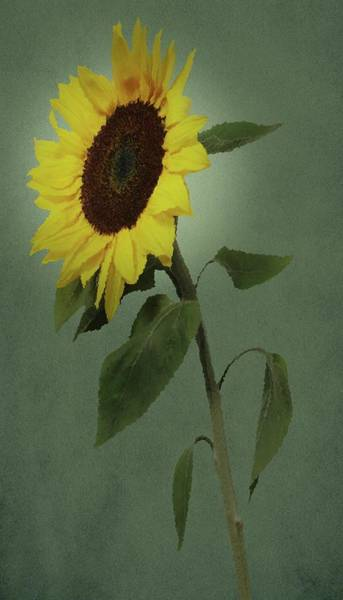 Painting - Sunflower Glow by David Dehner