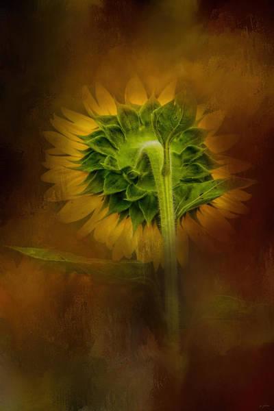 Photograph - Sunflower Goodbye by Jai Johnson