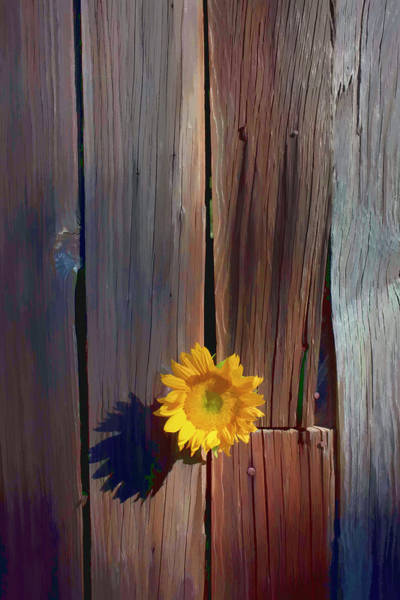 Life Together Photograph - Sunflower In Barn Wood by Garry Gay