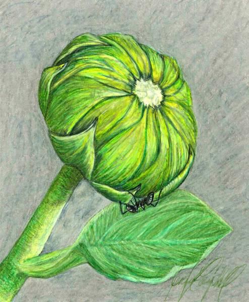 Sunflower Seeds Drawing - Sunflower by Jennifer Campbell Brewer