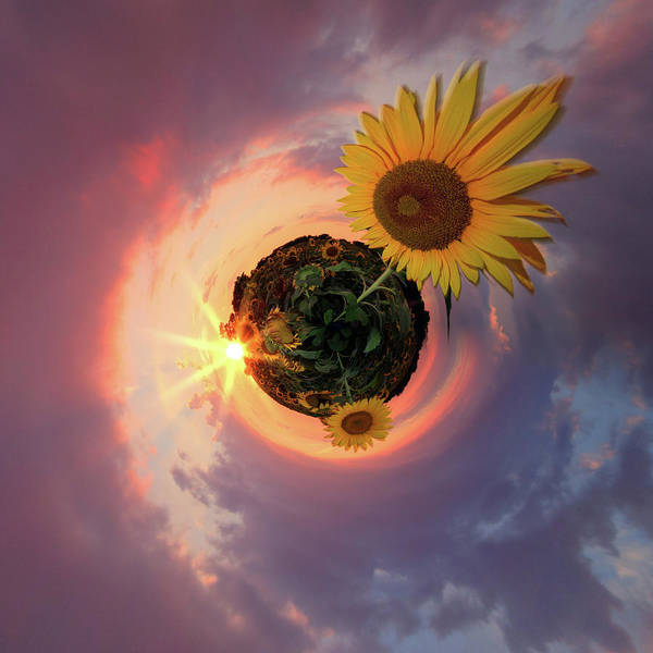 Photograph - Sunflower Little Planet  by Emmanuel Panagiotakis