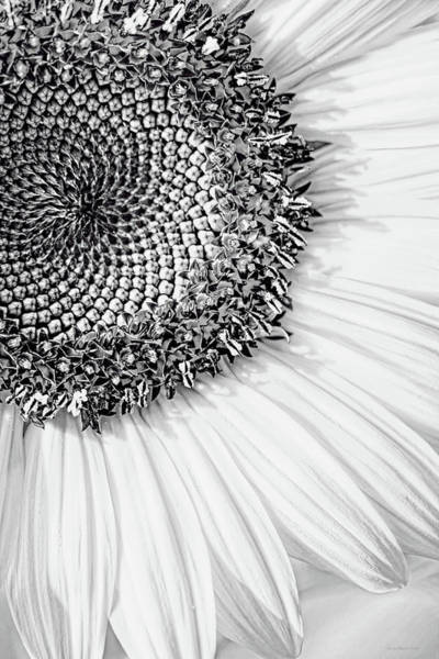 Wall Art - Photograph - Sunflower Macro Black And White by Jennie Marie Schell