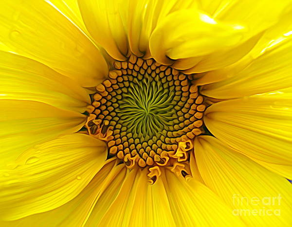 Photograph - Sunflower Macro Expressionist Effect by Rose Santuci-Sofranko