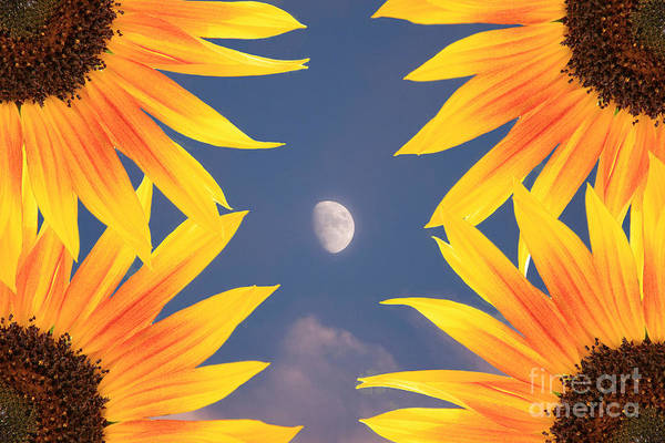 Photograph - Sunflower Moon by James BO Insogna