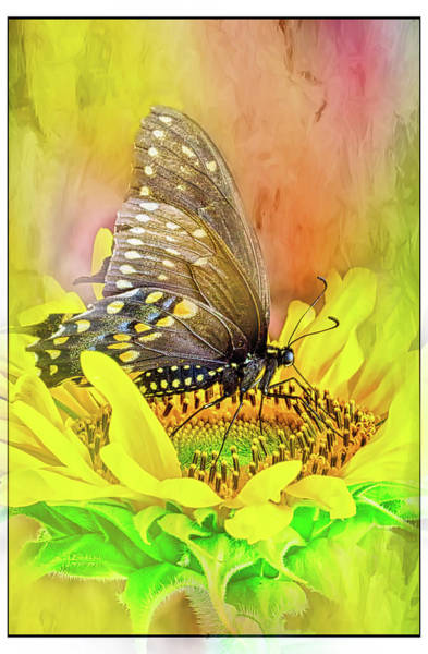 Wall Art - Photograph - Sunflower Nectar by Ches Black