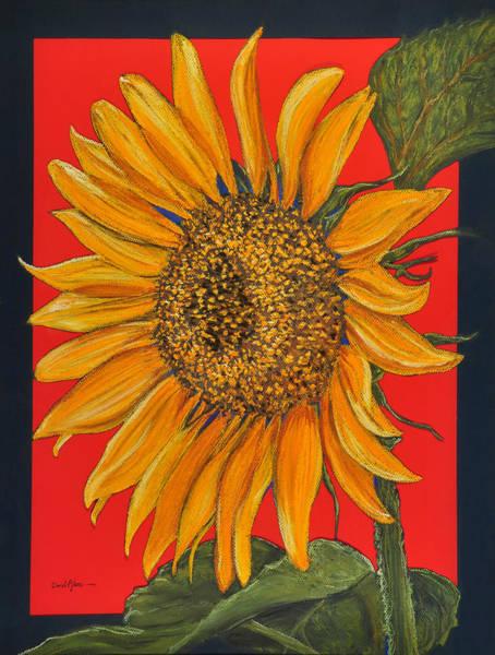 Pastel - Da153 Sunflower On Red By Daniel Adams by Daniel Adams
