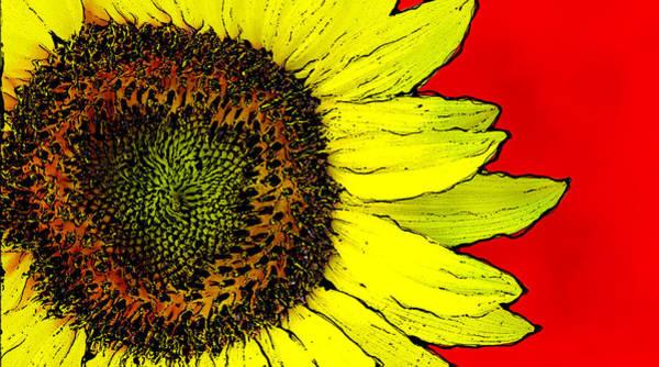 Wall Art - Photograph - Sunflower Power by David G Paul