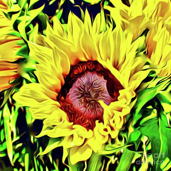 Wall Art - Photograph - Sunflower Power by Jerome Stumphauzer