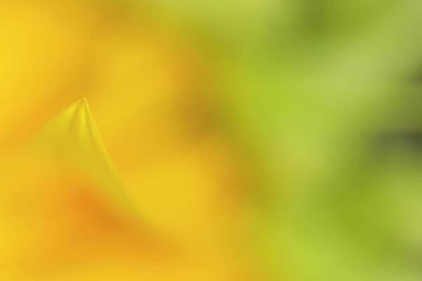 Photograph - Sunflower by Roberto Aloi