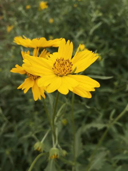 Photograph - Sunflower Sanctuary  by Brad Hodges