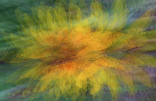 Photograph - Sunflower Shimmy by Deborah Hughes