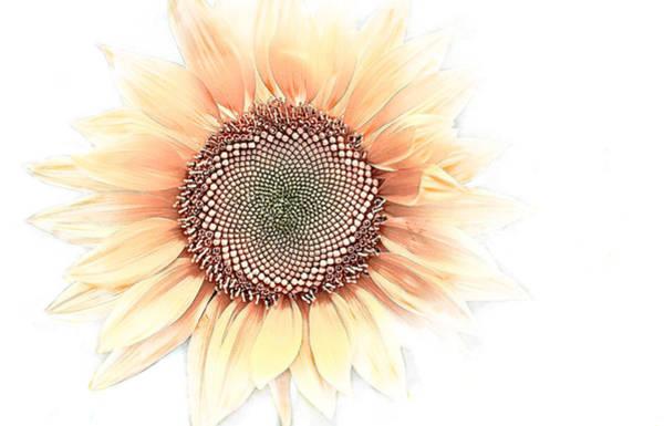 Wall Art - Digital Art - Sunflower Simple by Terry Davis