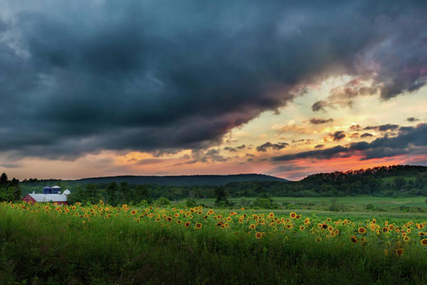 Photograph - Sunflower Sunset 2018 by Bill Wakeley