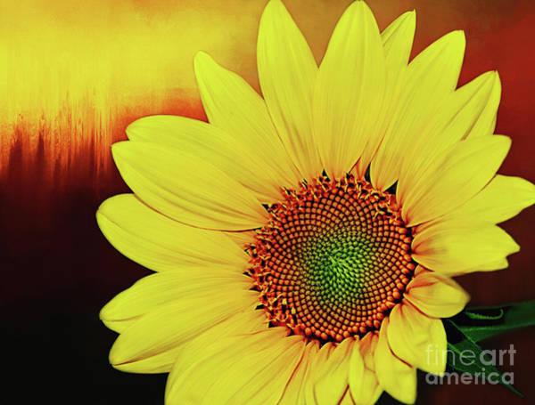 Sunflower Seeds Photograph - Sunflower Sunset By Kaye Menner by Kaye Menner