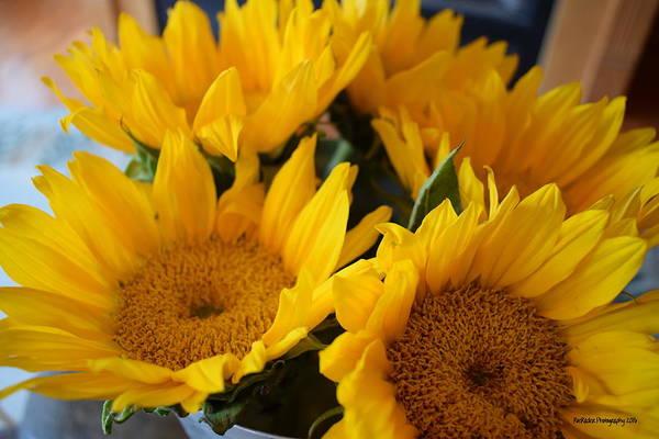 Rader Photograph - Sunflower Surprise by Roe Rader