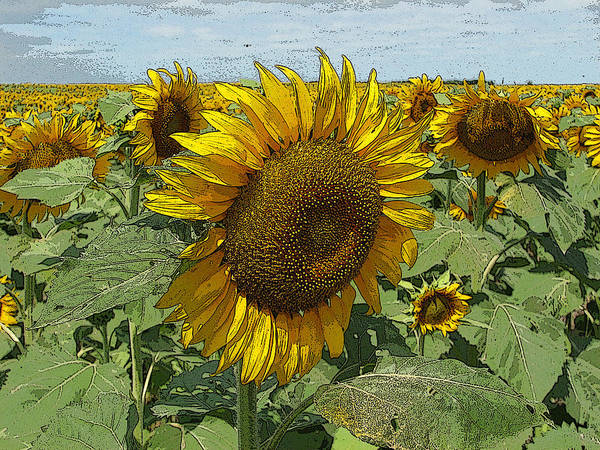 Photograph - Sunflower Van David Style by David Matthews