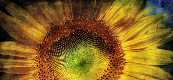 Photograph - Sunflower by Vittorio Chiampan
