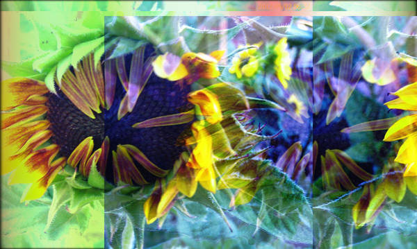 Multiple Exposure Digital Art - Sunflower Warrior  by Tonia Feagle