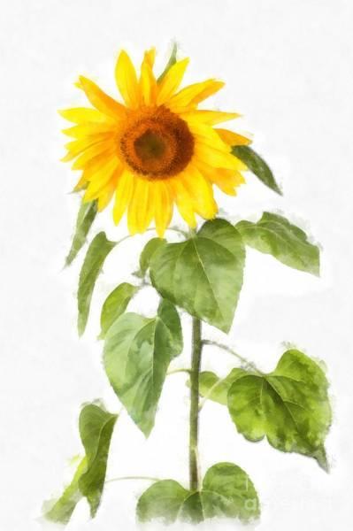 Wall Art - Digital Art - Sunflower Watercolor by Edward Fielding