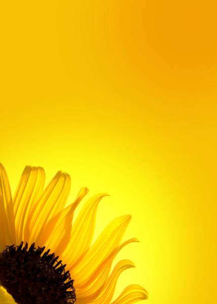 Wall Art - Photograph - Sunflower Yellow by Mark Rogan