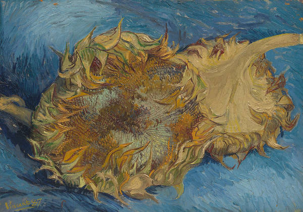 Painting - Sunflowers, 1887 by Vincent van Gogh