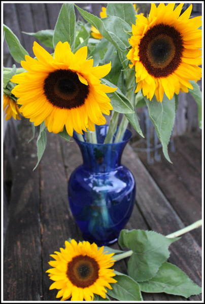 Pollen Photograph - Sunflowers And Blue Vase - Still Life by Dora Sofia Caputo Photographic Design and Fine Art