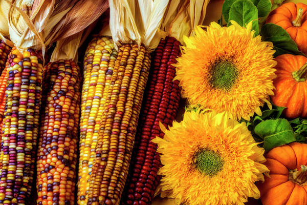 Indian Corn Photograph - Sunflowers And Indian Corn by Garry Gay
