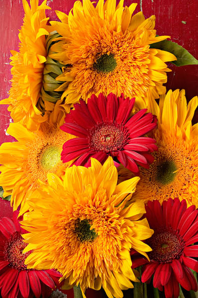 Mum Photograph - Sunflowers And Red Mums by Garry Gay