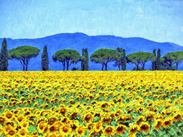 Painting - Sunflowers And Tuscany Cedars by Dominic Piperata