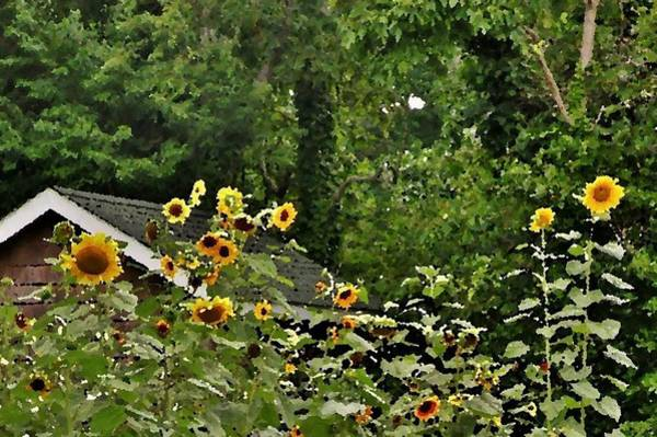 Photograph - Sunflowers At The Good Earth Market by Kim Bemis