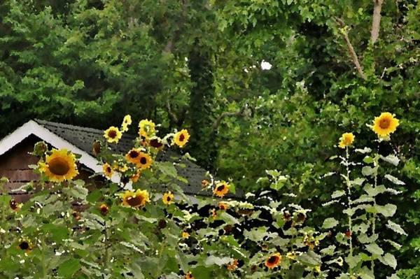Bemis Photograph - Sunflowers At The Good Earth Market by Kim Bemis