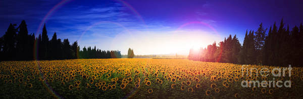 Photograph - Sunflowers Await The Morning Sun by Peter Noyce
