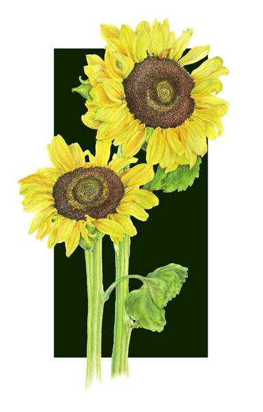 Sunflower Seeds Drawing - Sunflowers Block by Georgea Hugus