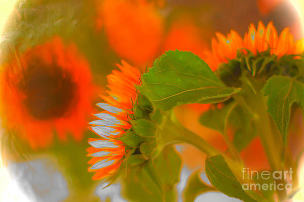 Alexander Vinogradov Photograph - Sunflowers. by Alexander Vinogradov