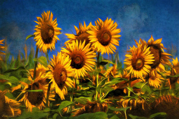 Photograph - Sunflowers Glory by Anna Louise