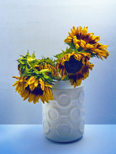 Wall Art - Photograph - Sunflowers In Circle Vase Blue Tournesols by William Dey