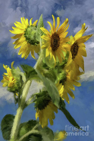 Digital Art - Sunflowers In The Sun by Lois Bryan