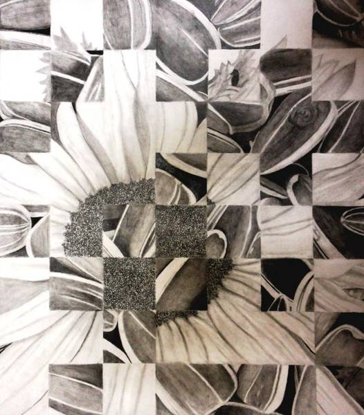 Sunflower Seeds Drawing - Sunflowers by Jenna Myers